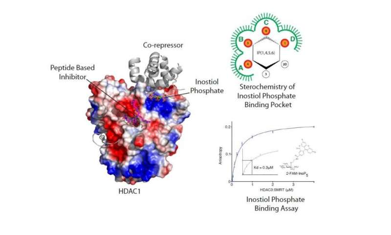 New understanding of key enzymes could help to develop new drugs to treat diseases such as cancer and Alzheimer's