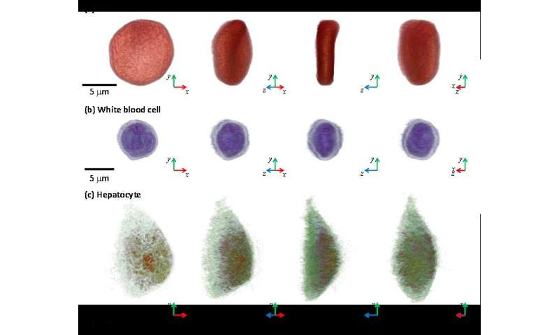 Next-generation holographic microscope for 3-D live cell imaging
