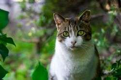 No evidence of long-term welfare problems with electronic containment of cats