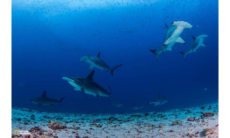 Northern Galapagos Islands home to world's largest shark biomass