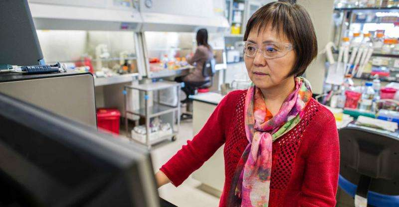 NREL's Min Zhang keeps her 'hugs' happy, leading to biofuel breakthroughs