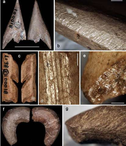 Paleolithic bone tools found from South China