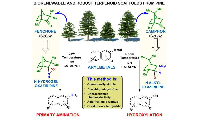 Pine product offers fresh take on fine chemical synthesis