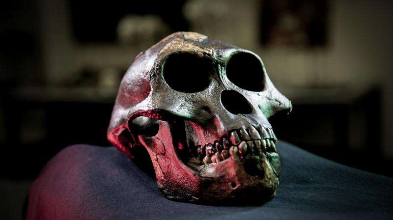 Predicting human evolution: Teeth tell the story