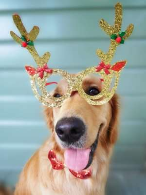 Protect your pets from lethal treats and heat this Christmas