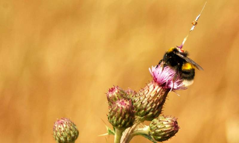 Radar tracking reveals the 'life stories' of bumblebees as they forage for food