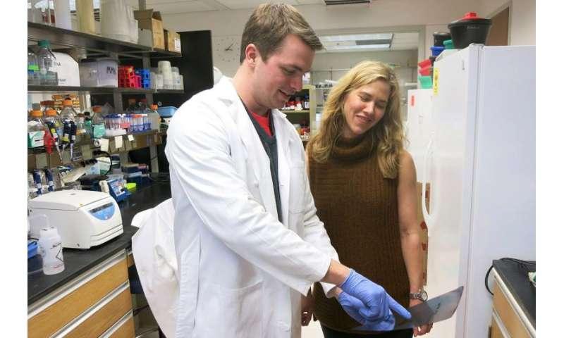Salmonella's strange recipe for defeating the immune system