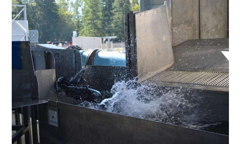 Salmon trucking success could open miles of historical spawning habitat