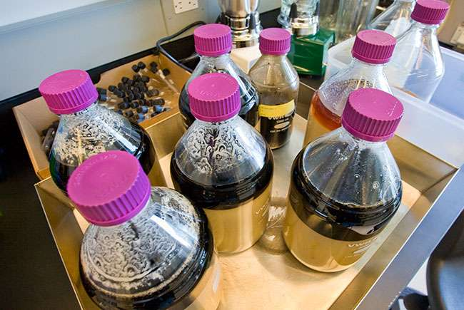 Scientists harness CO2 to consolidate biofuel production process