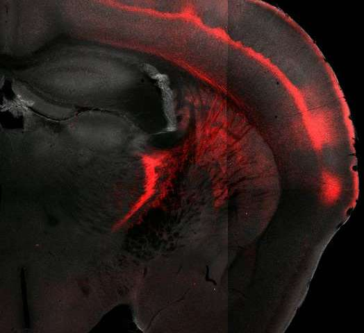 Sensory function: Thalamus enhances and stores sensory information