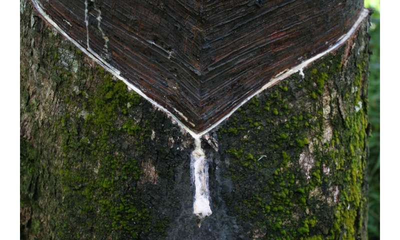 Small-scale agriculture threatens the rainforest
