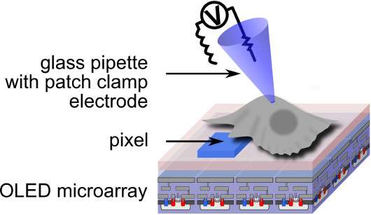 Smartphone lights can activate live cells