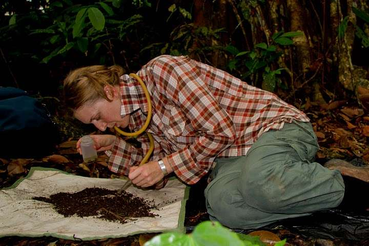 Smithsonian and collaborators find that trap-jaw spiders strike prey with lightning speed