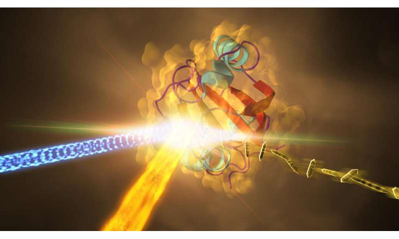 Split-second imaging reveals molecular changes involved in vision