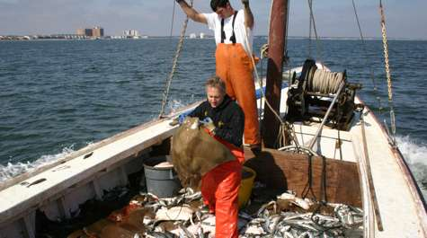 Study discounts alleged link between sharks, rays and bivalves