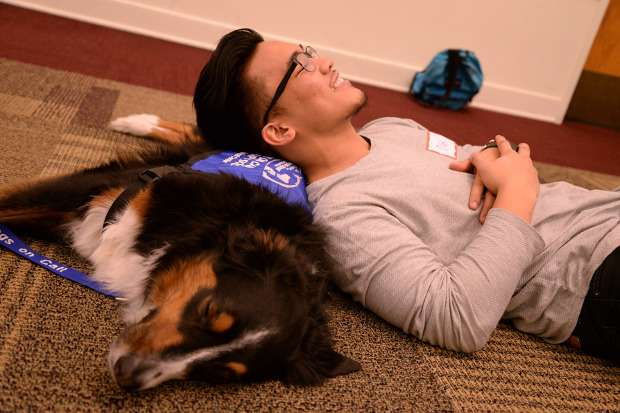Study finds college students feel less stress prior to exams after visits with therapy dogs