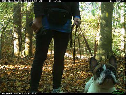 Study sniffs out effects of dogs, humans on wildlife