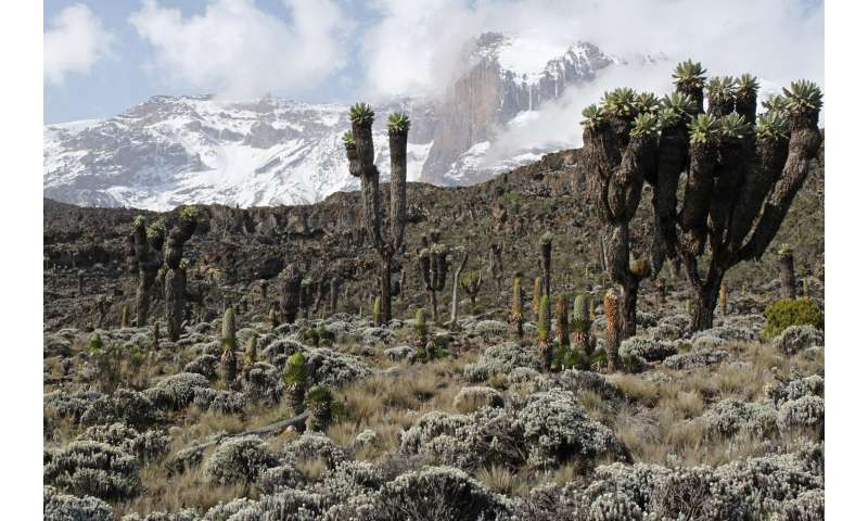 Temperature drives biodiversity