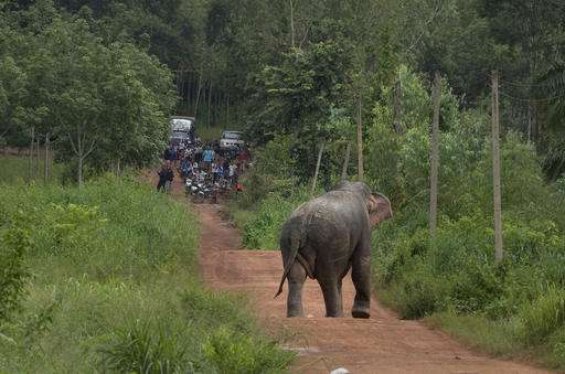 Thai farmers launch (bee) sting operation to stop elephants