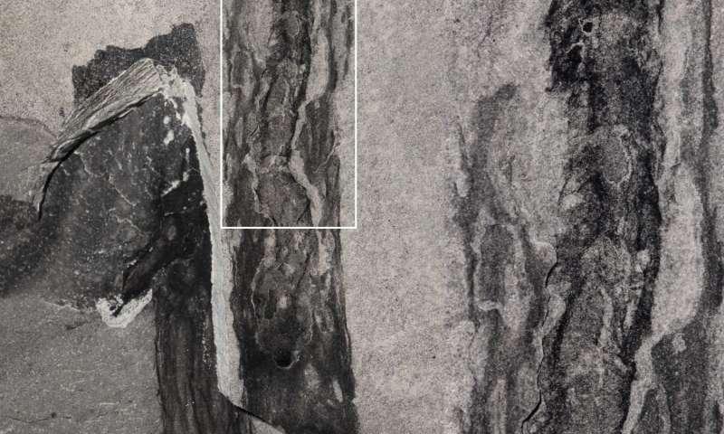 The secret to an Oesia life: Prehistoric worm built tube-like 'houses' on sea floor