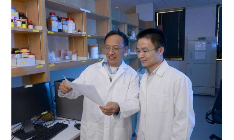 UT Southwestern researchers' work shines light on how to improve cancer immunotherapy