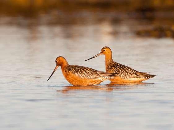 Warmer climate threatening to northern birds
