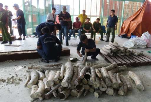 Workers remove ivory hidden in timber as policemen and officials look on at Cat Lai port in Ho Chi Minh City