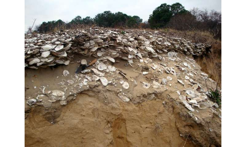 Scientists find sustainable solutions for oysters in the future by looking into the past