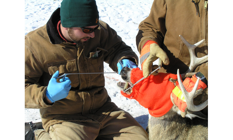 Researchers document first-ever evidence of white-tailed deer declines from CWD