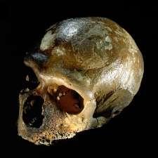Study reveals how diet shaped human evolution