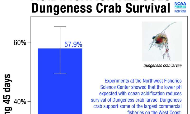 Ocean acidification puts NW Dungeness crab at risk