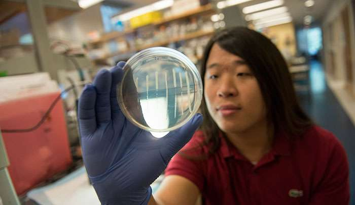 Scientists uncover a clever ranking strategy bacteria use to fight off viruses