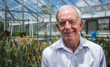 Researchers discover a special power in wheat