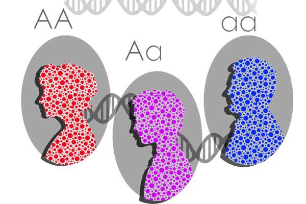 Scientists discover important genetic source of human diversity