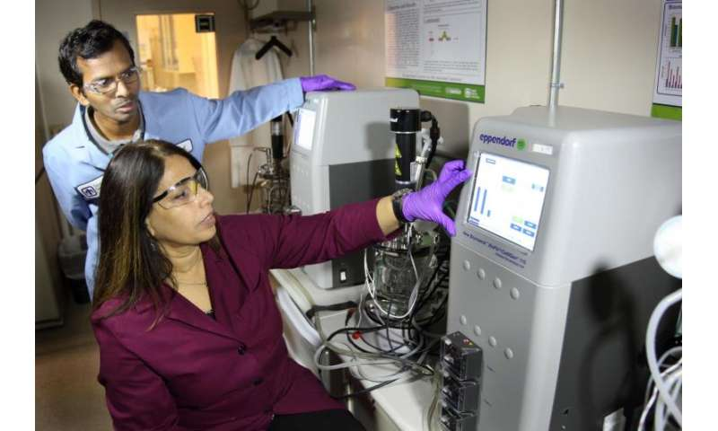 Researchers decode metabolic pathway of soil bacterium that thrives on lignin