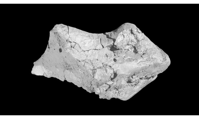 133 million-year-old dinosaur brain fossil found in England