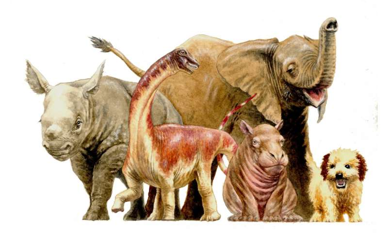 Newly discovered baby Titanosaur sheds light on dinosaurs' early lives
