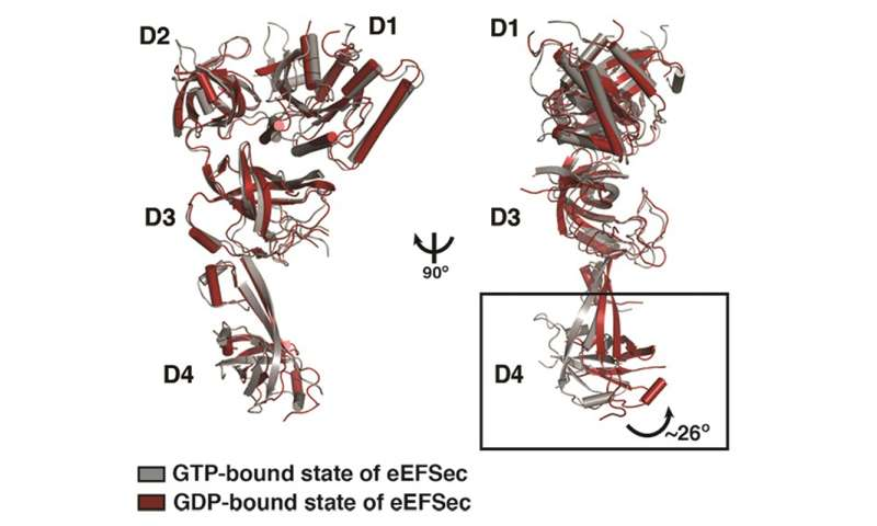 Researchers discover how selenium is incorporated into proteins