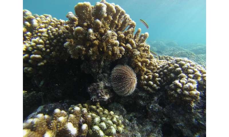 Ocean acidification study offers warnings for marine life, habitats