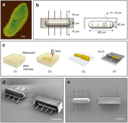 Research team develops world's first ciliary stroke motion microrobots