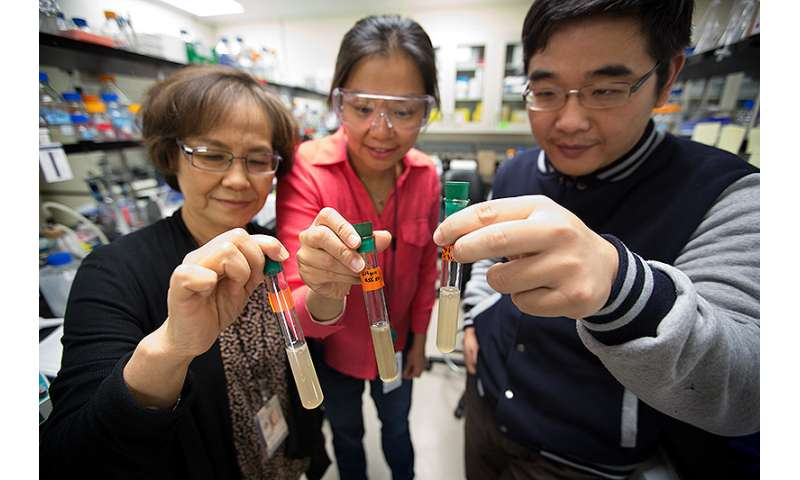 Researchers discover how a bacterium, Clostridium thermocellum, utilizes both CO2 and cellulose