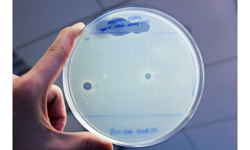 Researchers discover new antibiotics by sifting through the human microbiome