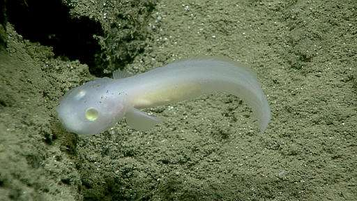 Images from the deep unveil weird and wild sea critters