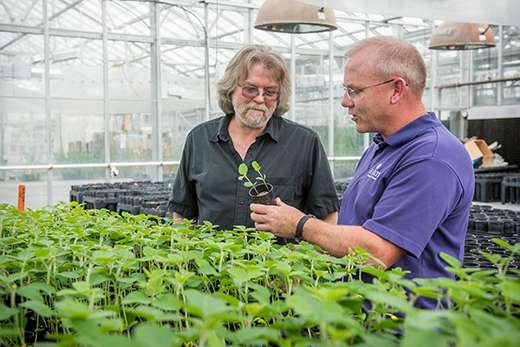 Environmentally friendly invention may save soybean industry millions of dollars per year