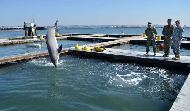 Researchers discover previously unknown bacterial species in dolphins