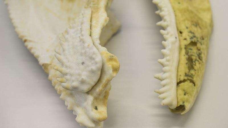 3-D printed fish fossil may reveal origin of human teeth