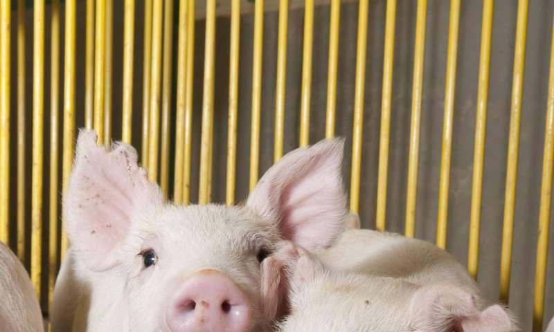 Antibiotic resistance genes increasing