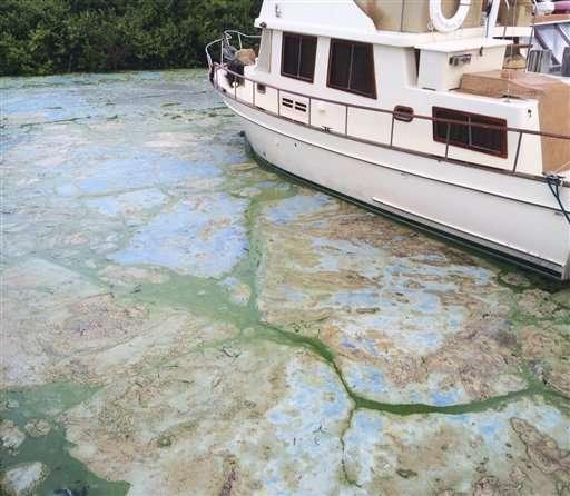 Army Corps to reduce lake flows fueling Florida algae bloom