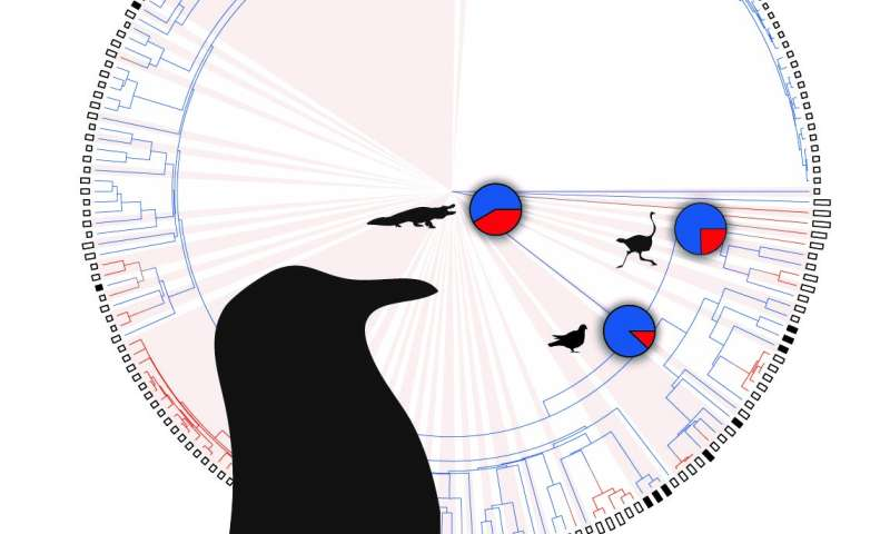 Bird research suggests calling dinosaurs may have been tight-lipped