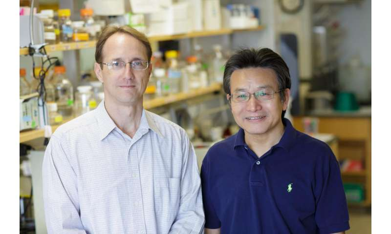 Cancer cells' transition can drive tumor growth, UF Health researchers find